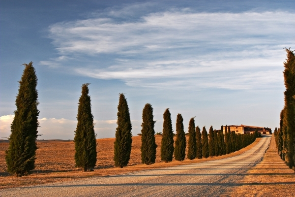Échte Italiaanse bomen