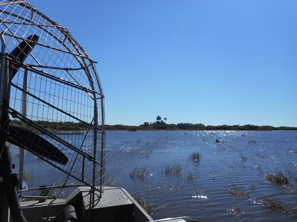 Everglades in airboat Florida