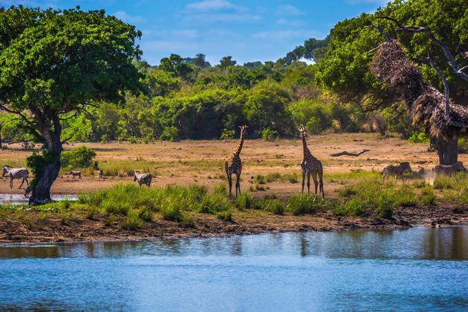 Krugerpark Zuid-Afrika