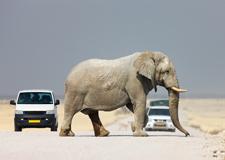 zuid afrika olifant op de weg ctablok