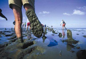 Tot mijn middel in het water: wadlopen van Holswerd naar Ameland