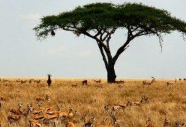 Tips van reisexpert Anjes: Zuid-Afrika