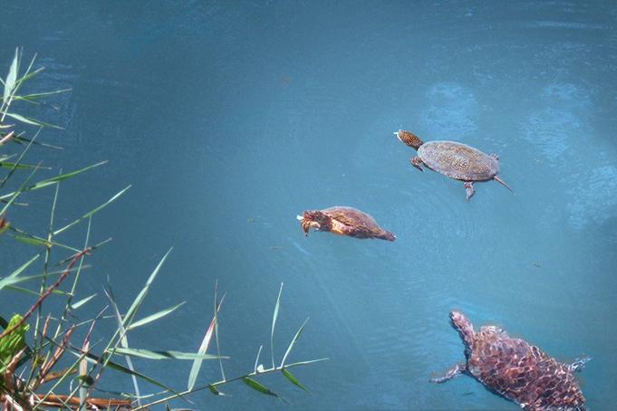 Schildpadden Kaiafas