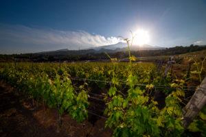Wijnbouw met op de achtergrond de vulkaan de Etna