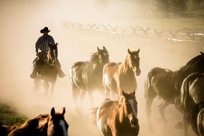Stampede met cowboys in Canada