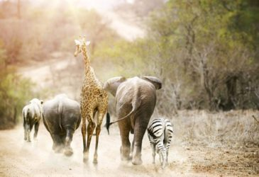 Actief roadtrippen in Zuid-Afrika