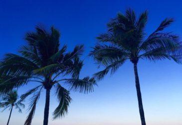 3 highlights van Florida