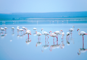 Flamingo's in Malaga