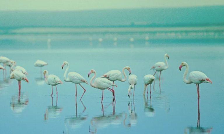 flamingos-spanje-malaga-2