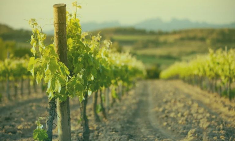 wijngaard-spanje