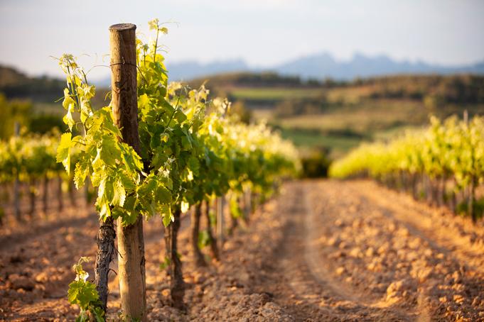 Wijn in Spanje