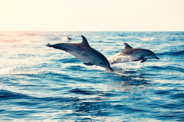 dolphins-jumping-from-the-sea