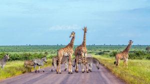parken zuid afrika