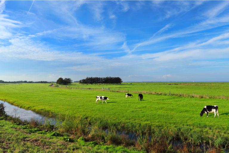 nederland-uitzicht