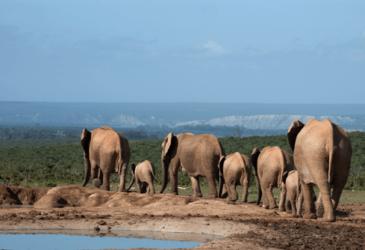 Roadtrip in Zuid-Afrika? Alle ins en outs over de Tuinroute