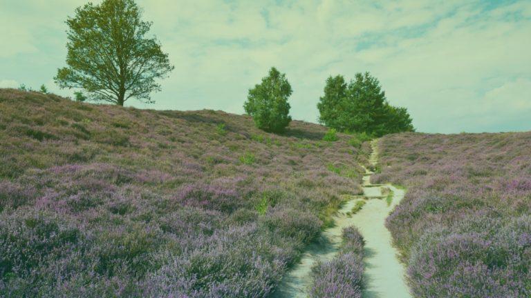 nederlandse-natuur-2