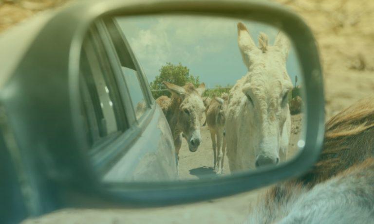 donkey-sanctuary-bonaire-2