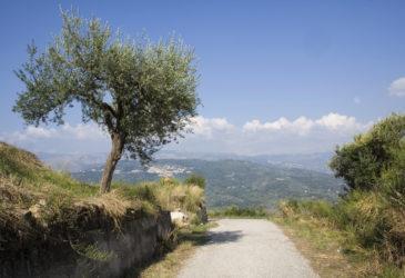 Tips van reisexperts Christel: Peloponnesos