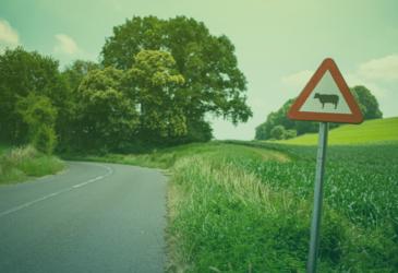5 gekke verkeersregels die je nog niet kent!
