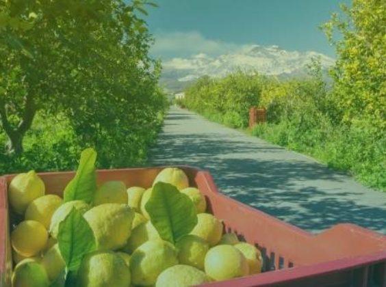 8 x prachtig Sicilië verkennen met de huurauto