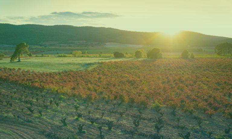 wijnveld-valencia