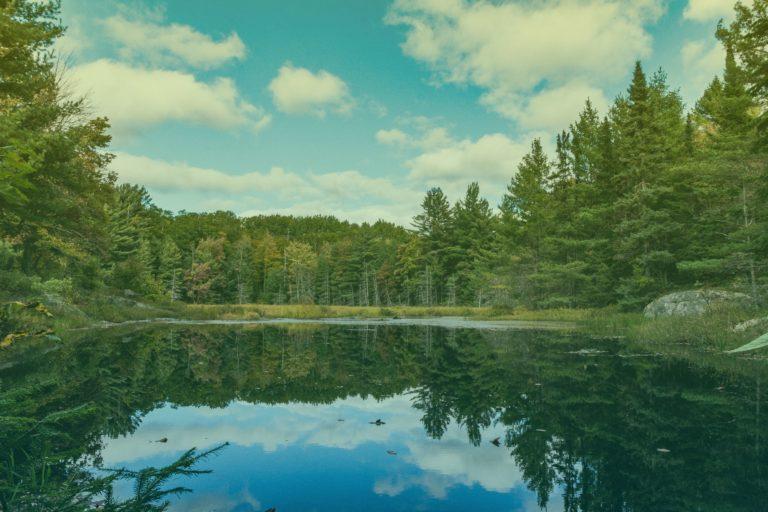 istock-1225386696-algonquin-provincial-park-filter